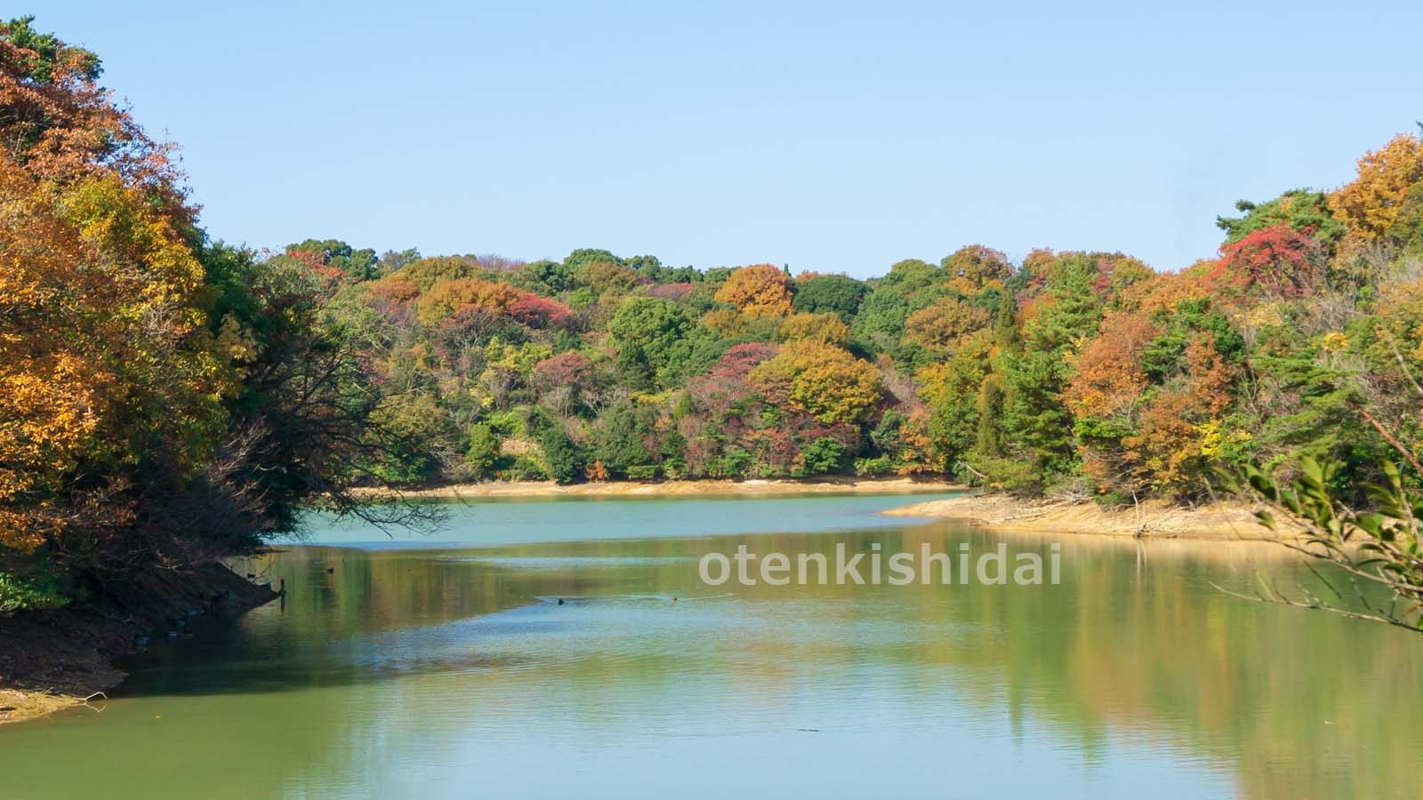 秋の森のイメージ