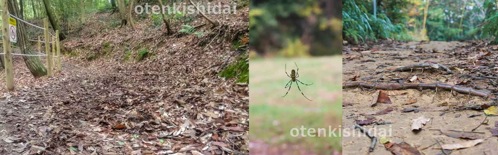 山道と蜘蛛