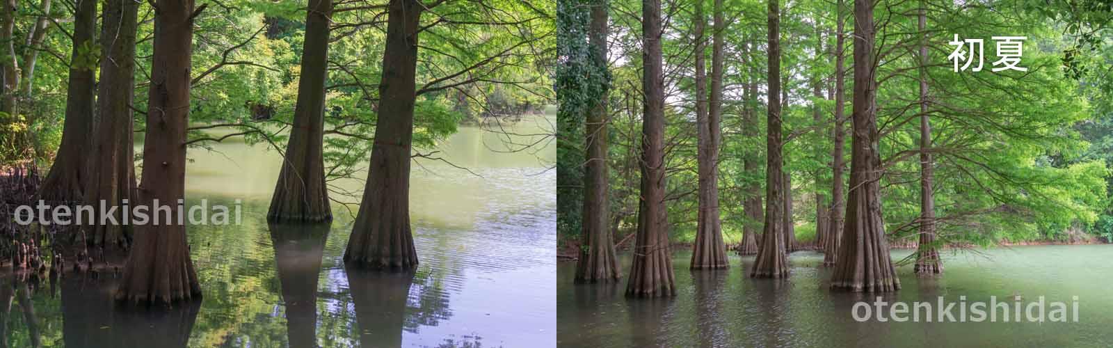 初夏の水辺の森