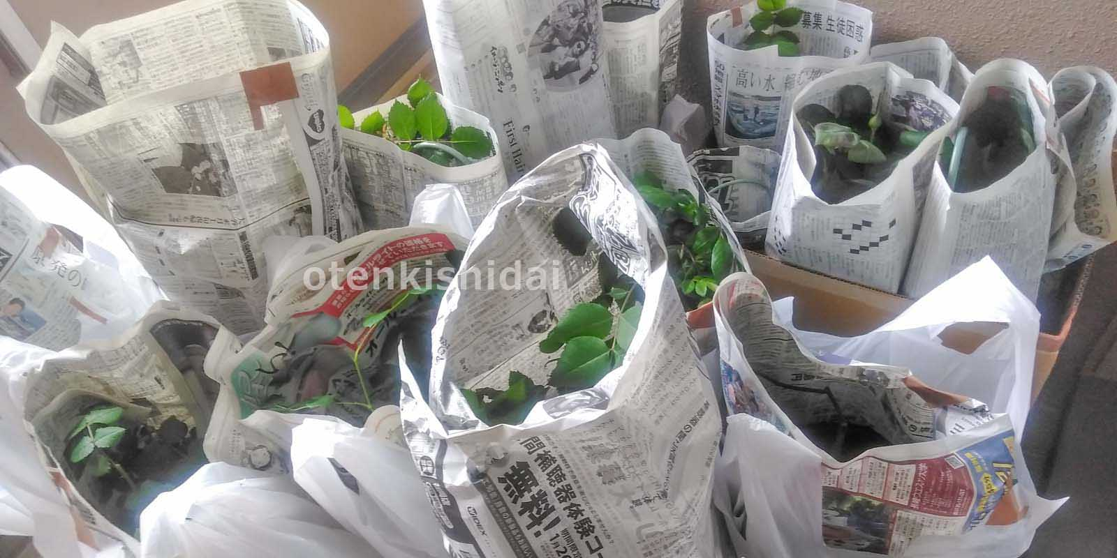 植木鉢の梱包2