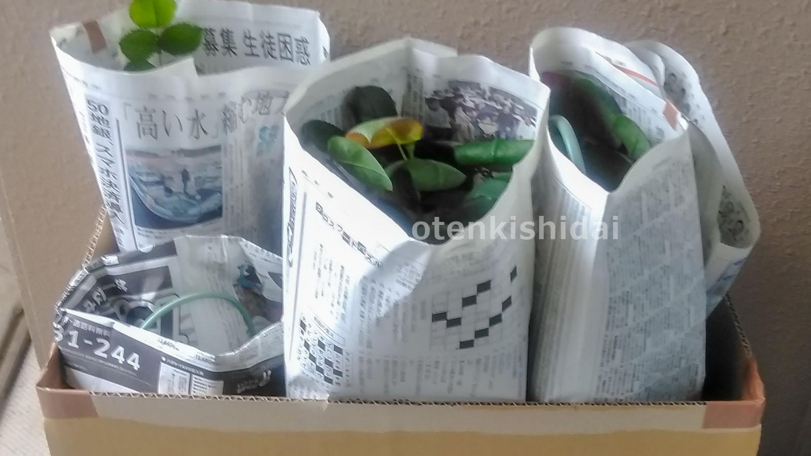 鉢の引越しのイメージ