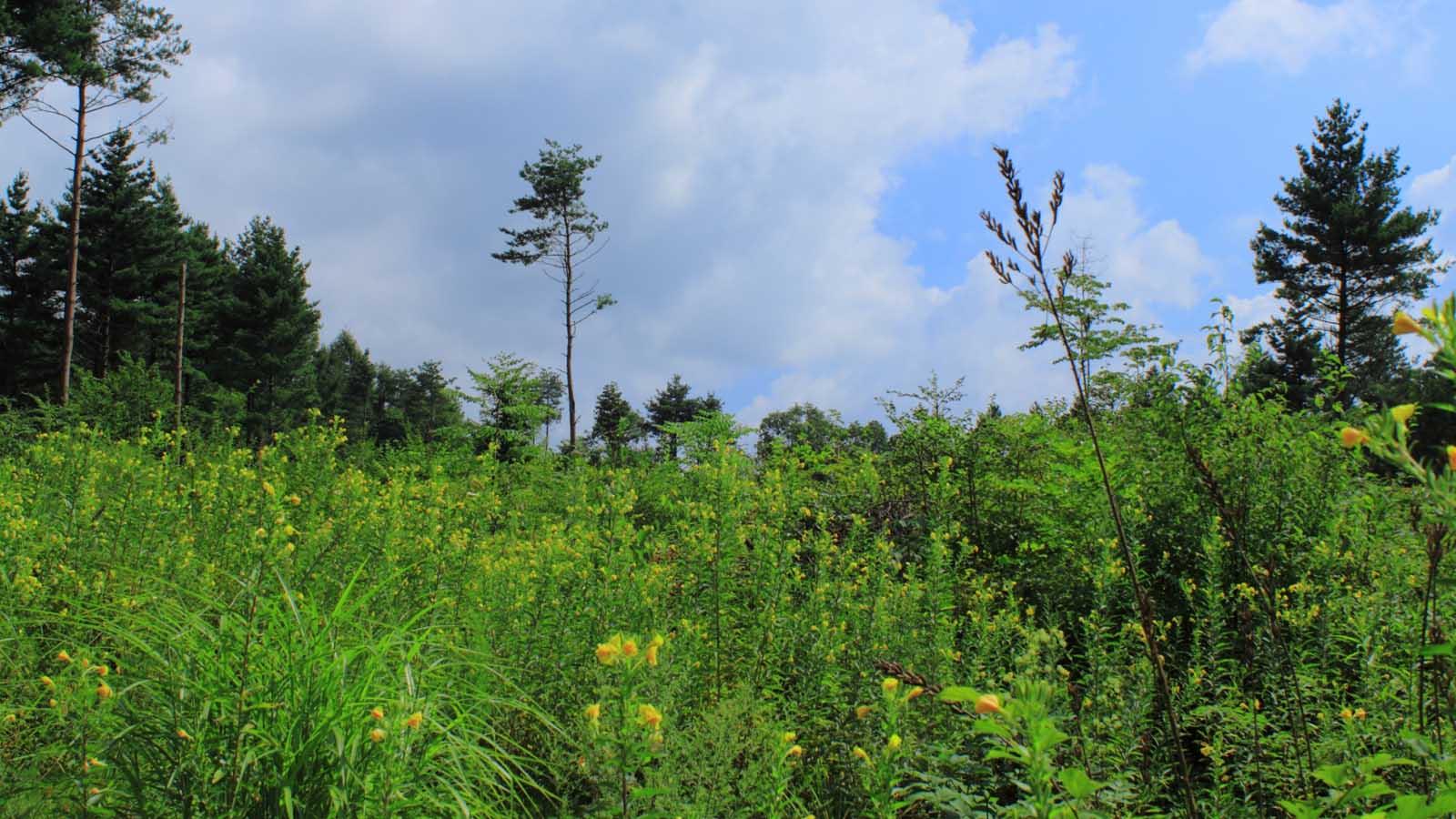 空き地の雑草