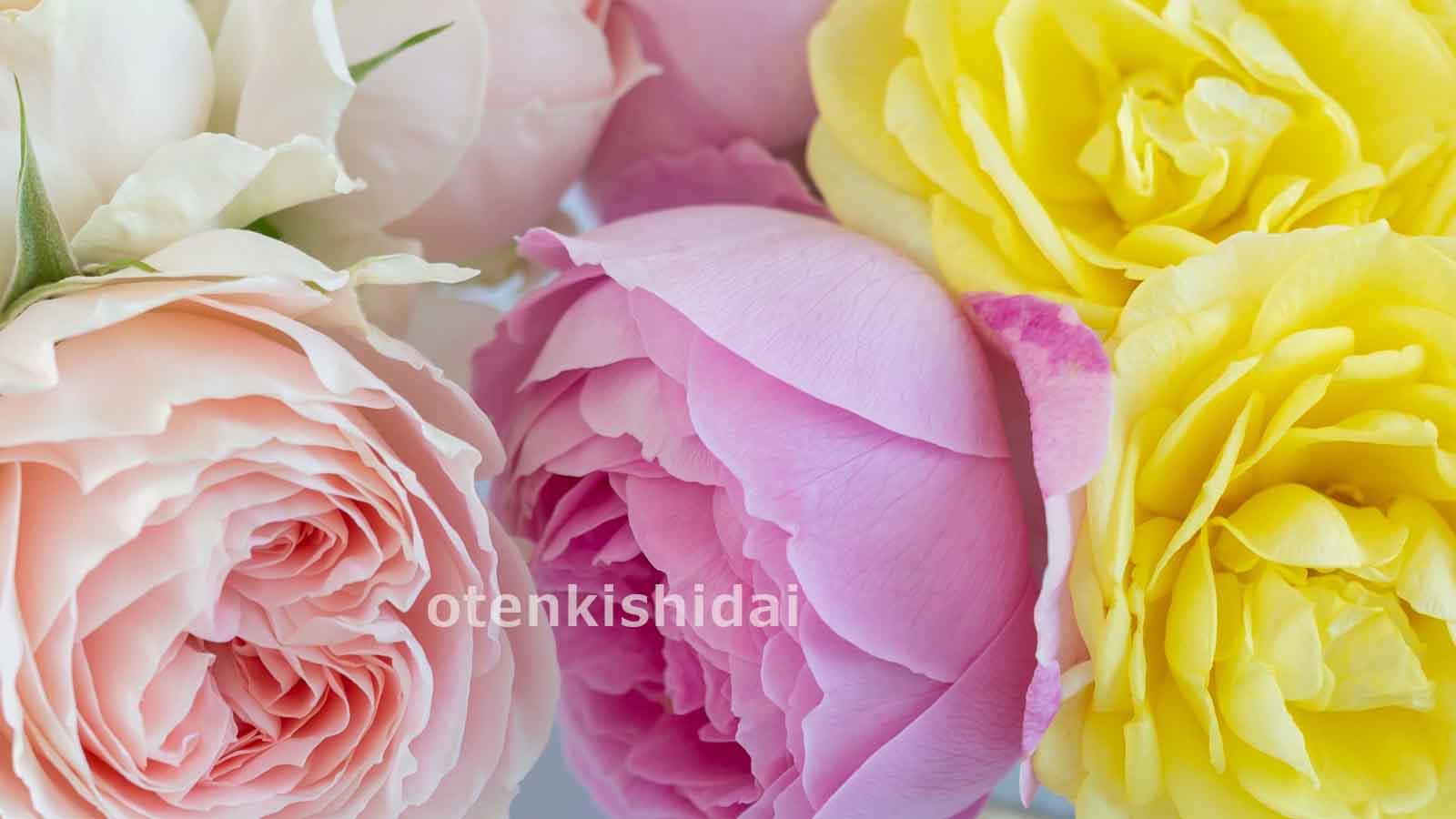 バラの集合写真のイメージ