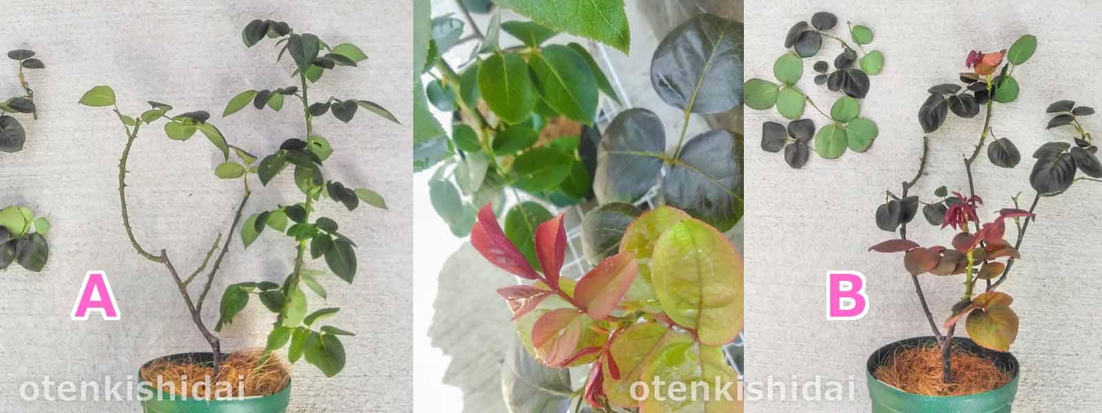 枝葉の手入れ01